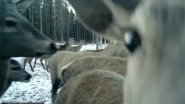 Охота за оленями с фотоловушкой BolyGuard