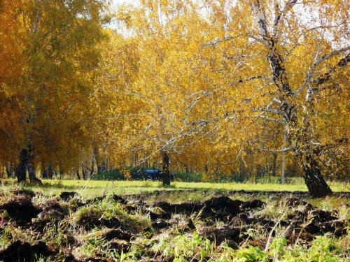 Осенние пашни....