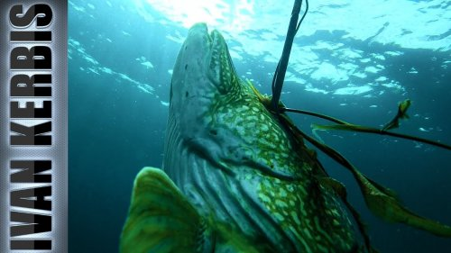 «Тувинское сафари на щуку» | Подводная охота в Туве (Тизер)