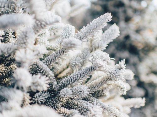 В зимнем серебре