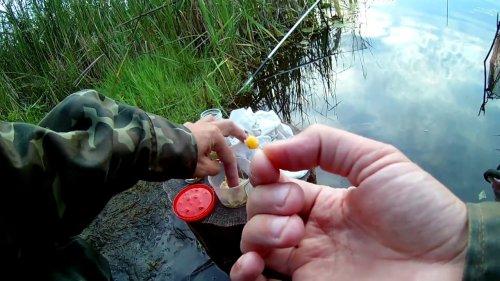 Ловля рыбы летом на поплавочную удочку!