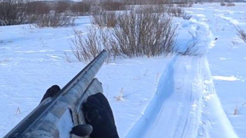 Крайняя охота на зайца в Сибири. Счет 1:1