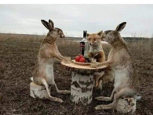 И зайцы отмечают