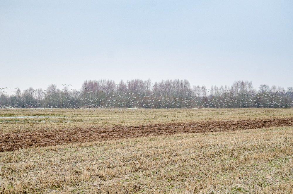 Фото-охота на гуся-4