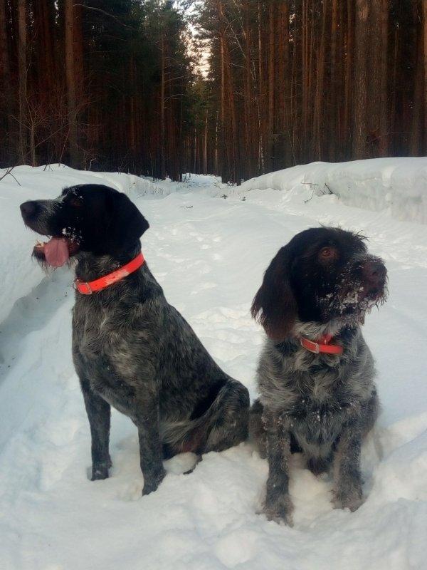 Март, но снег еще глубокий. Брайт Гектор III и Рич.
