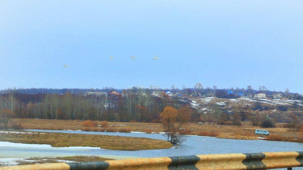 Скоро весна, уже лебеди прилетели...