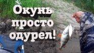 Рыбалка на фидер или лещи и окуни ломают мои палки!