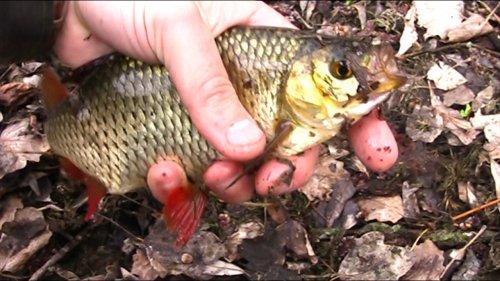 Рыбалка на пробку . Советы для рыбалки.