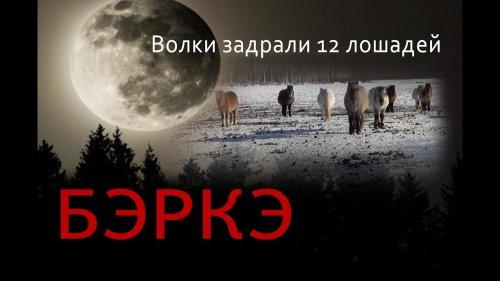 Волки задрали 12 лошадей в Южной Якутии.
