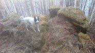 Минисюжет. Осенняя прогулка с собакой. Сопки, скальники.