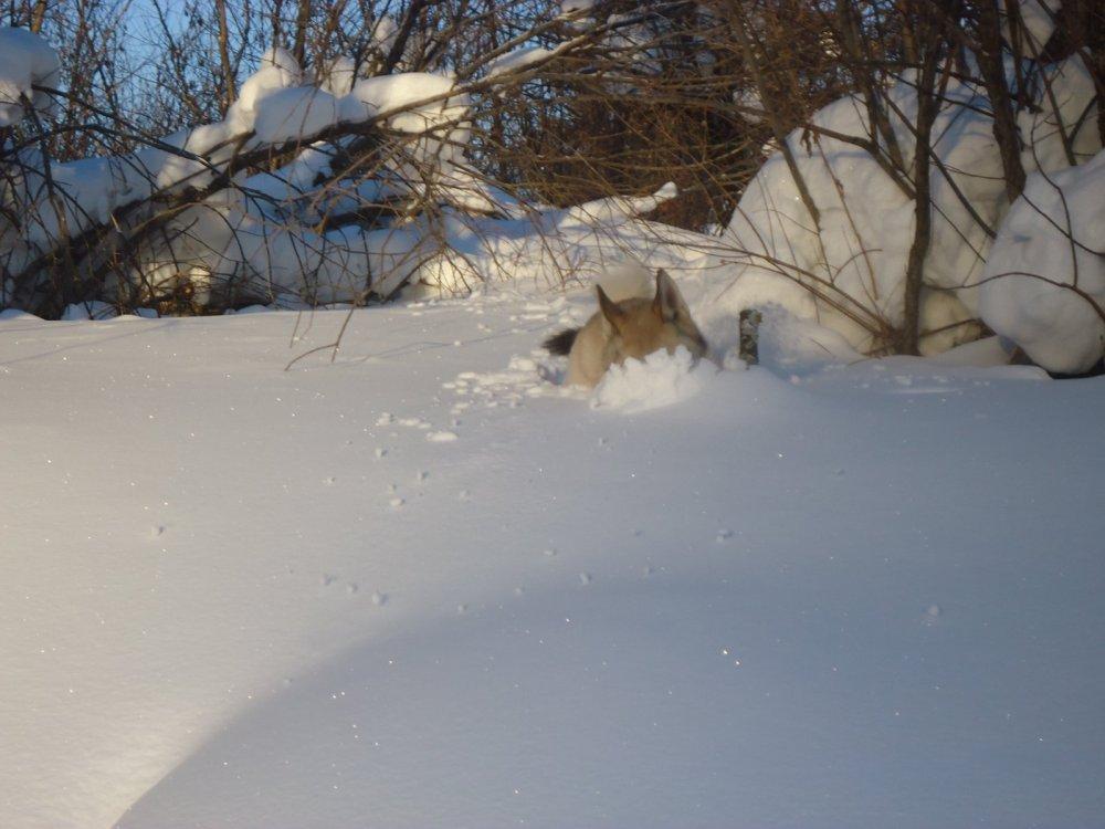 Навалило снега .Хозяин ты хоть говори куда идти.