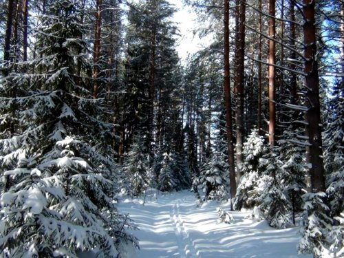 7 марта. Дорога в лесу.