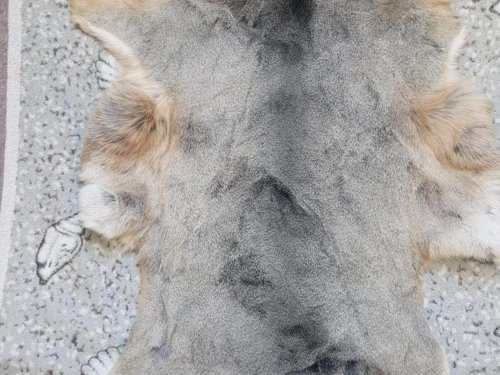 Мягкая шкура косули