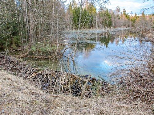 А в прошлом году здесь была вальдшнепинная полянка и маленький ручей.