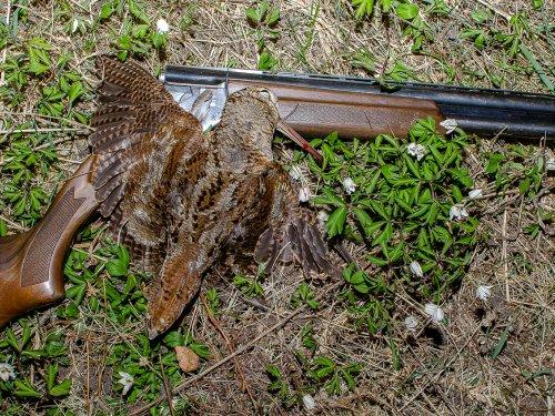 Сезон весенней охоты 2019 закрыт.