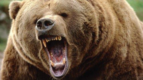 Как Спастись от Медведя Туристу  в Тайге