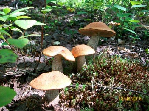 За грибами на Ветвистый.