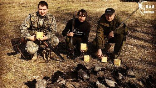 Как охотится на серую ворону в Украине весной? Разрешение, выбор снаряжения и практика.