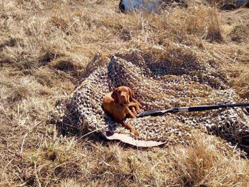 Открытие первого охотничьего сезона Охота поиска Вечером