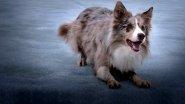 Секреты зимней рыбалки с собакой