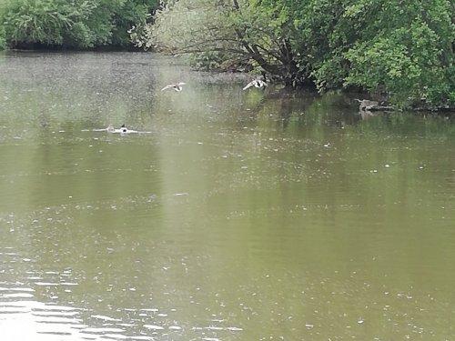 По реке плывёт утюг..... Извеняюсь, тополиный пух.....