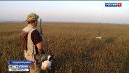 Сезон охоты: как готовят к соревнованиям охотничьих собак