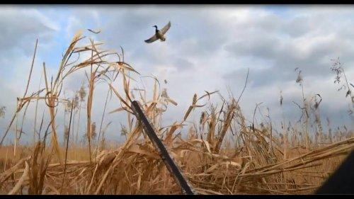 "Охота на селезня ""Вечерка в родных краях"""