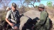 Охота на слона в Зимбабве. Точные выстрелы
