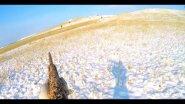 Охота на зайца по первому снегу. Здоровья этому зайцу!