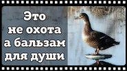 Классика русской охоты, так должен поохотится каждый охотник.