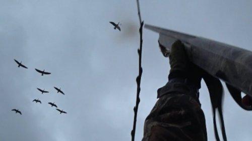 "Охота на гусей ""Дробь №3"" (goose hunting)"