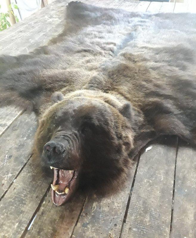 Ковер медведя