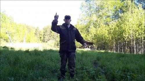 Посев полей в лесу для кабана и медведя. Биотехния 2019