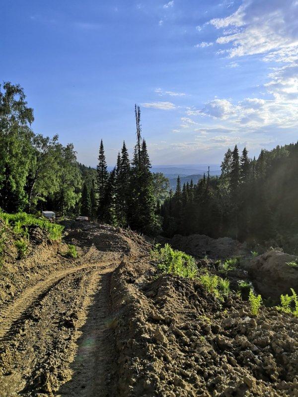 По лесовозной дороге домой