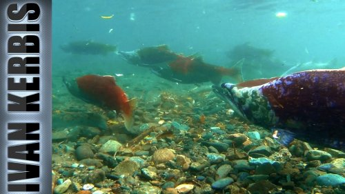«На краю земли» | Подводная охота на Камчатке (часть 3)