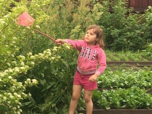 Доча охотится на бабочек