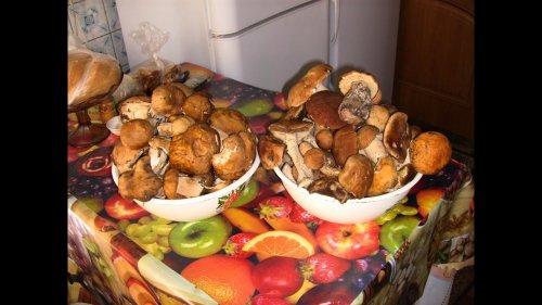 За былыми грибами.Грибные места!