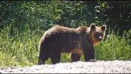 #15 Вести из леса. Лесник встретил медведицу с медвежатами