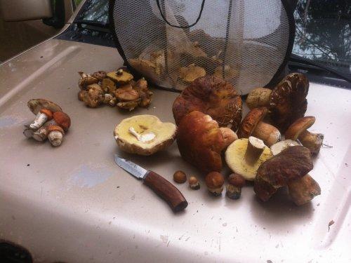 В Томске начался грибной сезон.