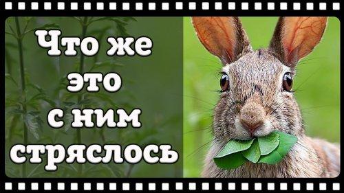 Вот это прикол! Реактивный заяц попал в кадр фотоловушки.