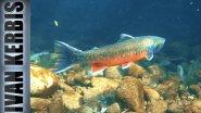 «На краю земли» | Подводная охота на Камчатке (часть 4)