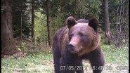 Вести из леса. В гости пришел медведь