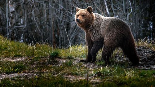 Медведь. Ликвидация…
