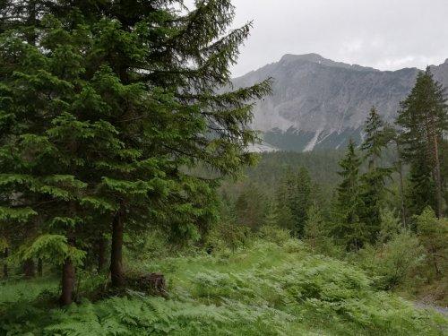 И Альпийская природа под стать Сибирской.