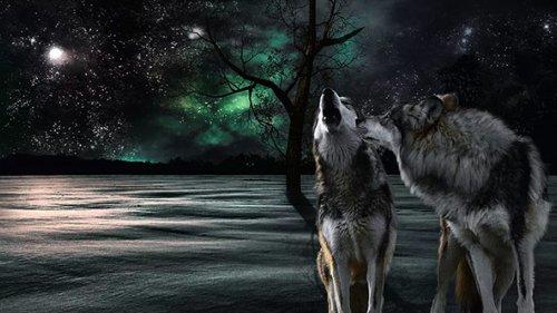 Два волка одной пулей...