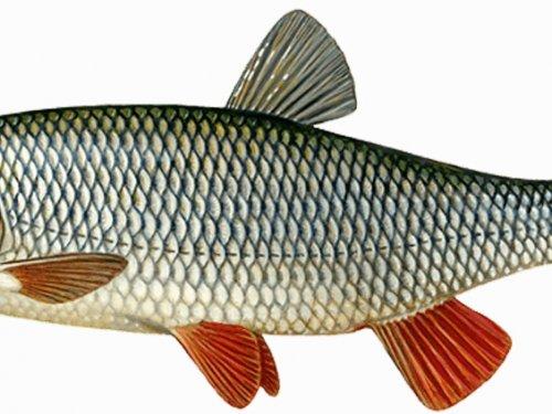 Рыбалка (ВНИМАНИЕ!!! - читать дозировано можно умереть со смеху)