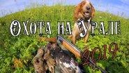 ОТКРЫТИЕ ЛЕТНЕ-ОСЕННЕЙ ОХОТЫ ПО ПЕРУ 2019!!!С Русским Охотничьим Спаниелем.