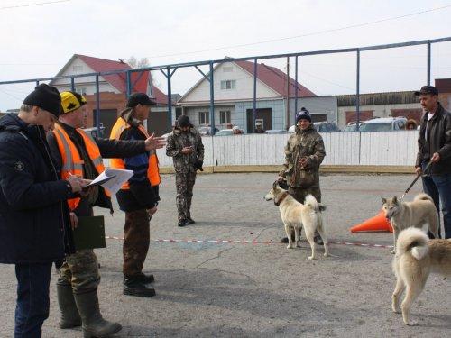 Районная выставка охотничьих собак г.Асино. Т.О. 13.04.19г 144