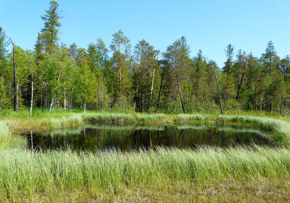Озерко на верховом болоте.
