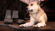Как я ночевал с собакой в Тайге на берегу Енисея